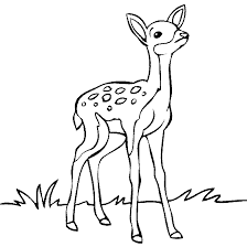 Small Picture Baby Animals Online Coloring Pages Page 1 Places to Visit