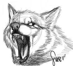 white wolf growling drawing. Wolf Growl Sketch By Werewolfsensedeviantartcom On DeviantArt And White Growling Drawing