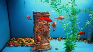 Aquarium Background Pictures Aquarium Background Calm Fish Swim Grass Blue Video Saver Underwater