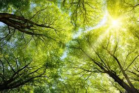 IMPORTANCIA DEL SOL: Para La Vida, Para Las Plantas Y Para La Tierra