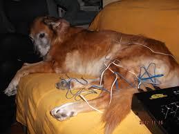 Resultado de imagen para medicina china en mascotas