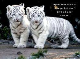 cute baby tigers wallpapers. Wonderful Wallpapers View Original Size Cute Baby Tigers Tumblr Amazing Wallpapers Image Source  From This In G