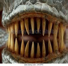 sharp teeth. tyrannosaurus rex teeth closeup - stock image sharp l
