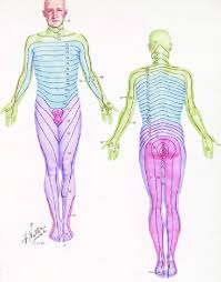 Dermatome Chart By Netter Download Scientific Diagram