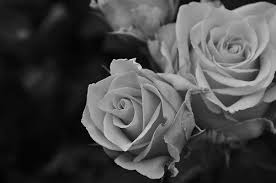 black and white flowers tumblr photography. Contemporary And Rose Flowers And Black White Image With Black And White Flowers Tumblr Photography S