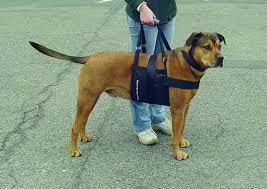 Urteil in nrw hunde dürfen auf waldwegen ohne leine laufen. Wie Bringe Ich Meinem Hund Bei Treppen Runter Zu Laufen Treppenhaus