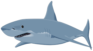 shark clipart. Simple Clipart Shark PNG Clipart Image For K