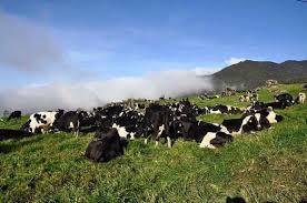 Hasil carian imej untuk Desa Dairy Farm