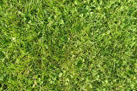 wild grass texture. Grass By Tmm-textures Wild Grass Texture