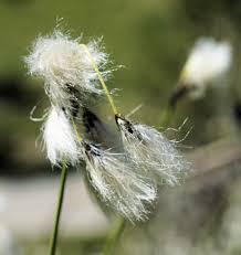 Vroege Vogels Foto Planten Pluizig