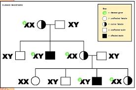 Patterns Of Inheritance Simple Patterns Of Inheritance Biology Encyclopedia Cells Plant Body