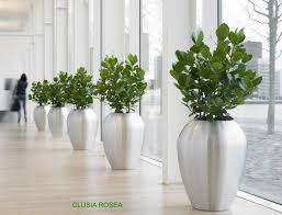 Image Tall Zoom Decorating Office Plants Any Green Office Plants Rental Plants