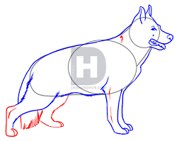 realistic dog drawing step by step. Interesting Drawing Description Here Is What Your GSD Looks Like Before You Start Finishing  Himher Off This Will Be Last Drawing Step So Do First  Throughout Realistic Dog Drawing Step By S