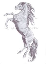 rearing horses drawings. Delighful Rearing Rearing Horse Drawing  Pencil Drawings Of Horses Rearing Wip By  Lindacolijn Horse Drawing To N