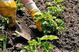 how to plant a garden. View Larger Image How To Plant A Garden R