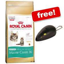 dry cat food for maine s