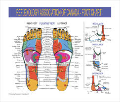 7 Reflexology Chart Templates Doc Pdf Free Premium