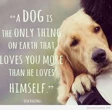 Quotes About Pets And Friendship Interesting Quotes About Pets And Friendship Gorgeous Best 48 Dog Best Friend
