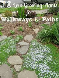 low growing plants guide border plants for your walkway