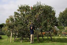 How To Graft A Fruit Tree  YouTubeHow To Graph A Fruit Tree