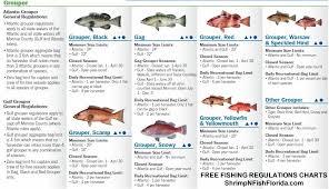 Florida Saltwater Fishing Regulations Chart Fwc Regulations Florida Fising Regulations
