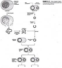 application of genetic engineering diagram major stages of gene cloning employing bacterial plasmids as the cloning vehicles