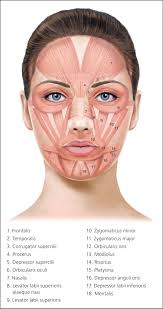 Botulinum Toxin Injection For Facial Wrinkles American