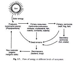 energy flow in an ecosystem  with diagram flow of energy at different levels of ecosystem