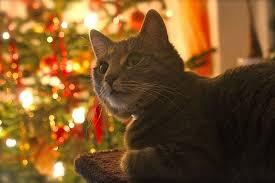 Coole Weihnachtssprüche Für Katzenfreunde