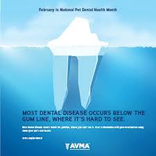 Hills Canine Dental Chart Pet Dental Care American Veterinary Medical Association