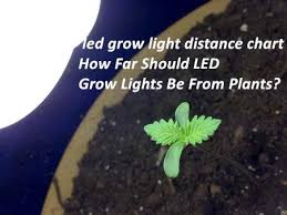 Led Light Distance Chart How Far Should Led Grow Lights Be From Plants