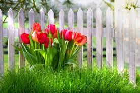 spring tulip desktop wallpaper.  Desktop Spring Tulips  Flowers U0026 Nature Background Wallpapers On Desktop  To Tulip Wallpaper L