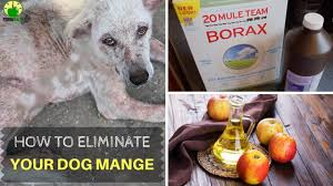 ❀ How To Cure Mange in Dogs | Home Remedies For Dog Mange!! - YouTube