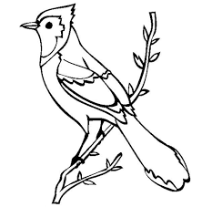 Small Picture Beautiful Blue Jay Bird Coloring Page Beautiful Blue Jay Bird