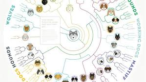 Kinds Of Dogs Chart A Simple Chart Shows How The Dogs We Love Today Evolved From