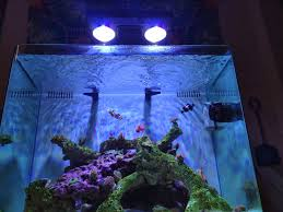 i weighed a lot of factors when determining which aquarium light fixture would be best for my reef tank