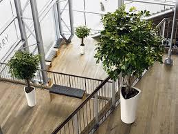 best indoor office plants. Interior Plants Best Indoor Office Plants