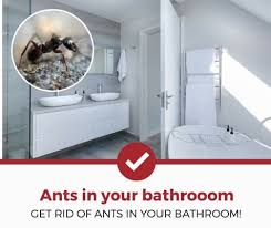 A How To Get Rid Of Ants In Bathroom 1