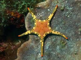 best starfish images starfish shells and stars