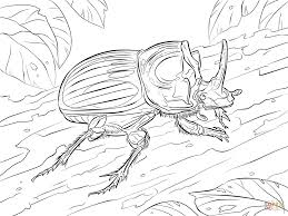 Small Picture Scarabaeus Lunus Beetle coloring page Free Printable Coloring Pages