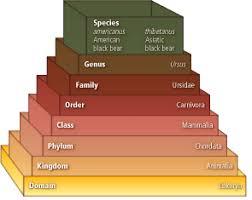 Bear Classification Chart Self Check Quizzes