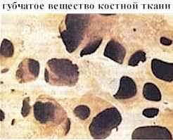 Трубчатые кости Реферат Головки трубчатых костей образованы губчатым веществом Пластинки костной ткани перекрещиваются в направлениях по которым кости испытывают наибольшее
