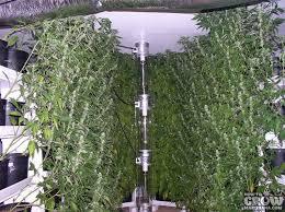 vertical aeroponics grow