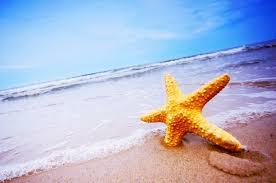 Resultado de imagem para mar estrela
