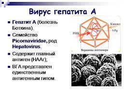 Вирусные гепатиты a b c d e и методики их лечения Вирус гепатита А