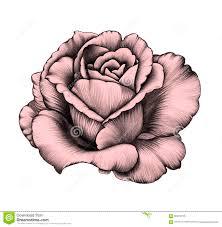 Rose Dessin Au Crayon Illustration Stock Illustration Du Couleurs