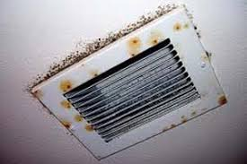 Image result for florida mold