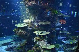 s e a aquarium marine life park sentosa net 0207