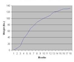 Schnauzer Growth Chart Related Keywords Suggestions