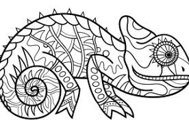 colouring in picture.  Picture Chameleon Colouring Page And Colouring In Picture Essential Kids